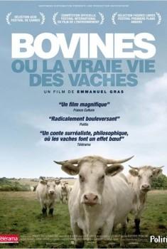 Bovines (2011)